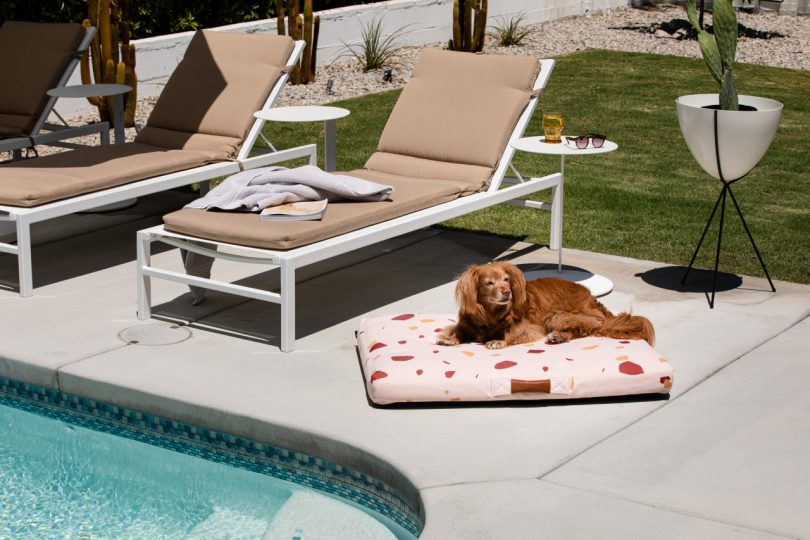 Dog laying on pink Terrazzo modern dog beds