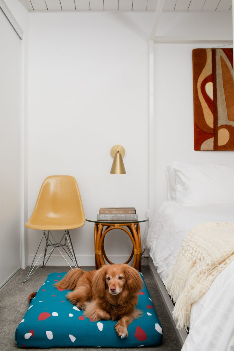 Teal modern dog beds in bedroom