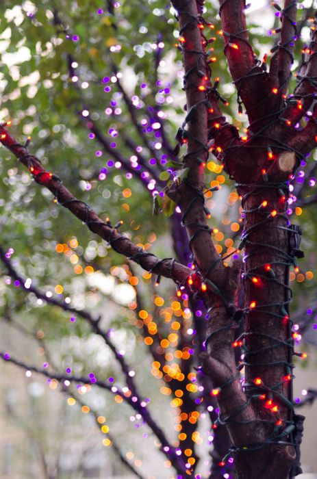 trees wrapped with purple, orange and red lights are cool for outdoor Halloween decor and can be easily applied