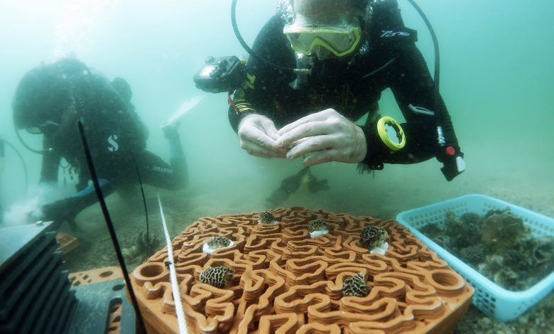 Revitalizing Biodiversity with 3D-Printed Coral Tiles Best Children's Lighting & Home Decor Online Store