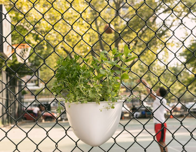 Plant Seads Turns Chain Link Fence Into Vertical Gardens Best Children's Lighting & Home Decor Online Store