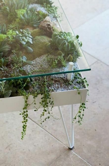 a modern table with hairpin legs as a giant planter with succulents and moss and a glass tabletop is amazing