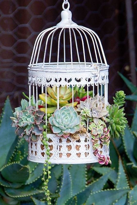 a beautiful white cage with moss and succulents of various kinds is a stylish decoration for outdoors and indoors