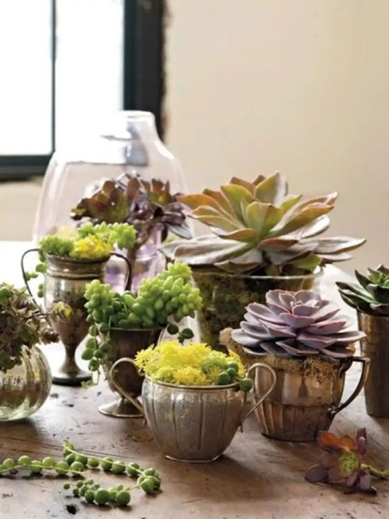 vintage goblets and cups with moss and succulents are a refined and chic idea to rock for your home decor