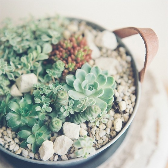 a bowl with leather handles, succulents and pebbles is a stylish decoration for a modern or boho space and it looks chic