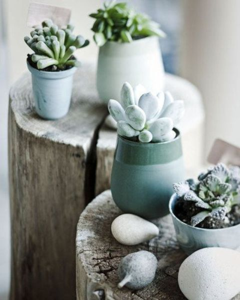 potted succulents in curved striped planters look very chic and very refined, modern style-like