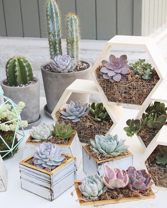 square and hexagon planters with succulents and cacti are stylish and chic and will bring a rustic feel to the space