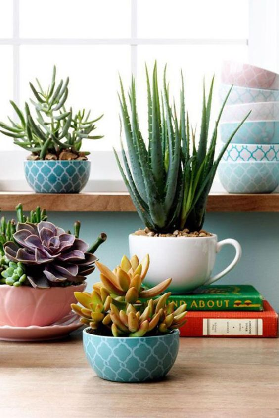pretty printed bowls and teacups are great as pastel planters for succulents, use plants of various kinds