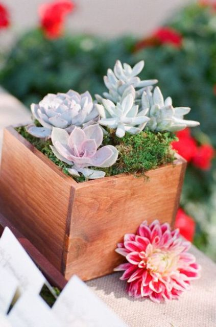 a wooden box with succulents and moss is a stylish decoration for your space that will bring a rustic feel to it