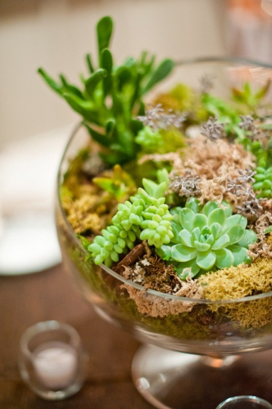 a glass bowl with moss, greenery and succulents is a stylish modern centerpiece to rock or just a cool decoration