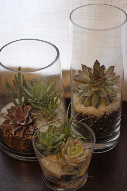 tall and low vases with succulents are a very modern and stylish way to display the plants you have
