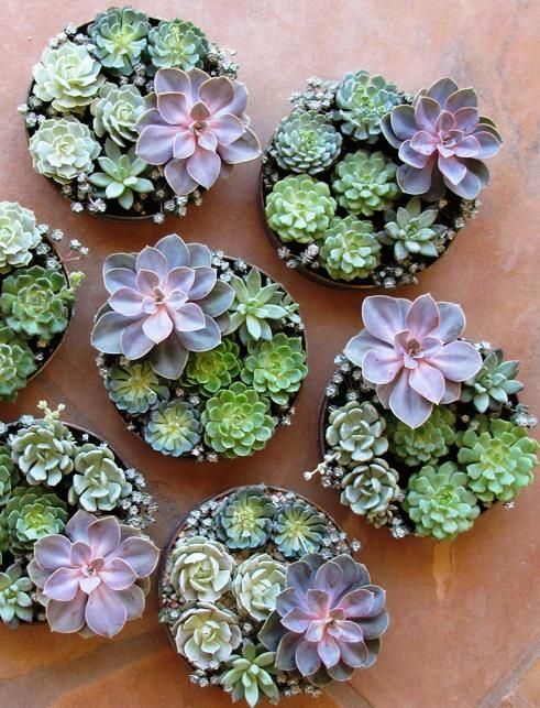 round wall succulent planters with succulents look very chic and very stylish and add charm to the space