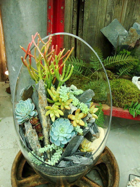 a rounded glass planter with lots of succulents and cacti, leaves and driftwood is a stylish centerpiece or decoration