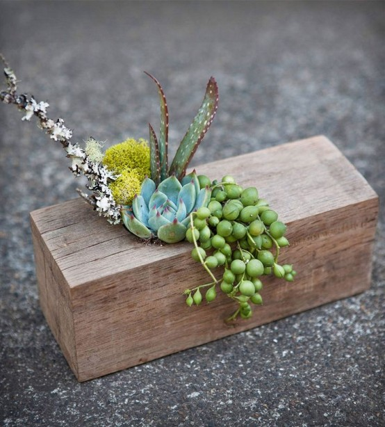a piece of wood with succulents, moss, berries and feathers is a very artistic centerpiece or decoration