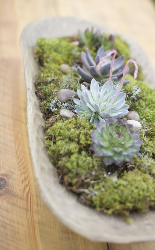 a wooden bowl with moss, succulents and pebbles is a natural and a bit rustic decoration