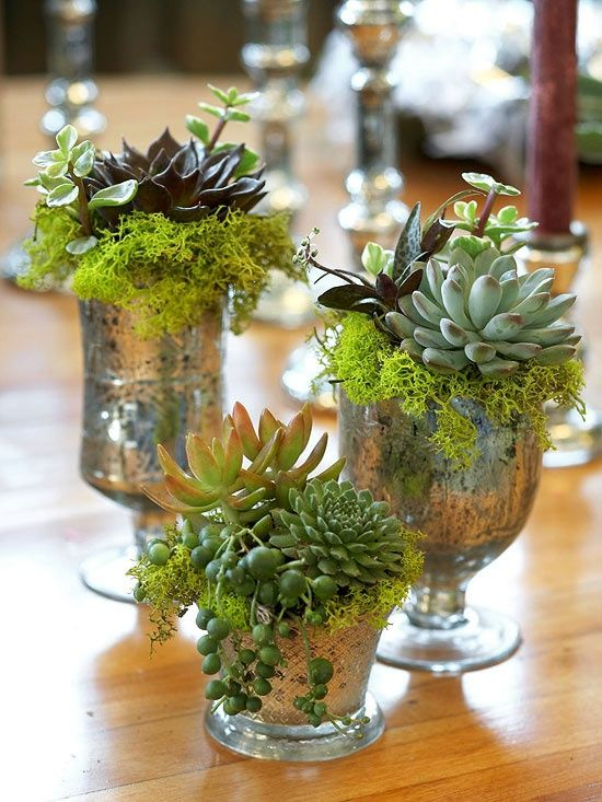vintage mercury glasses with moss and succulents are very cute and chic decorations for any space