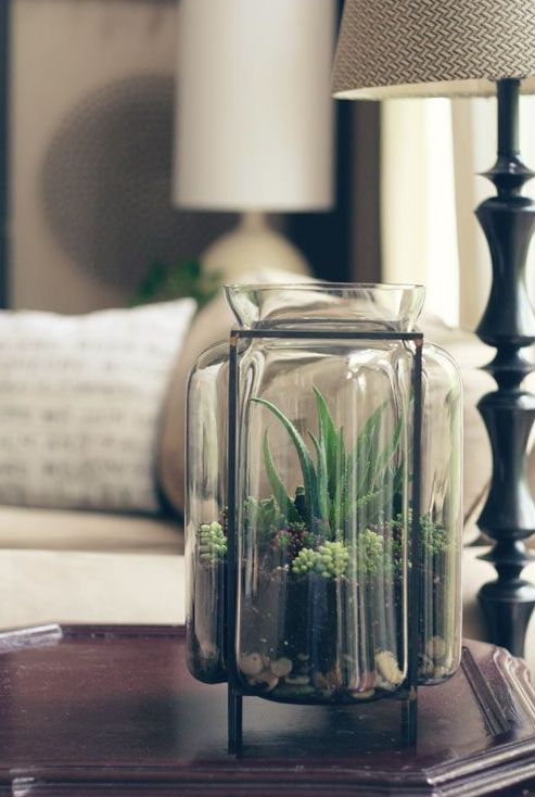 a tall jar as a planter with succulents of various types is a cool modern decoration to try