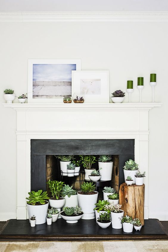 a fireplace with a white mantel and a black surround, potted succulents inside it and on the mantel