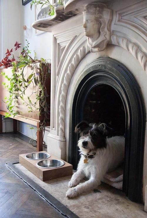 a refined vintage fireplace with a dog bed inside and some bows next to it is a very stylish and chic idea to rock