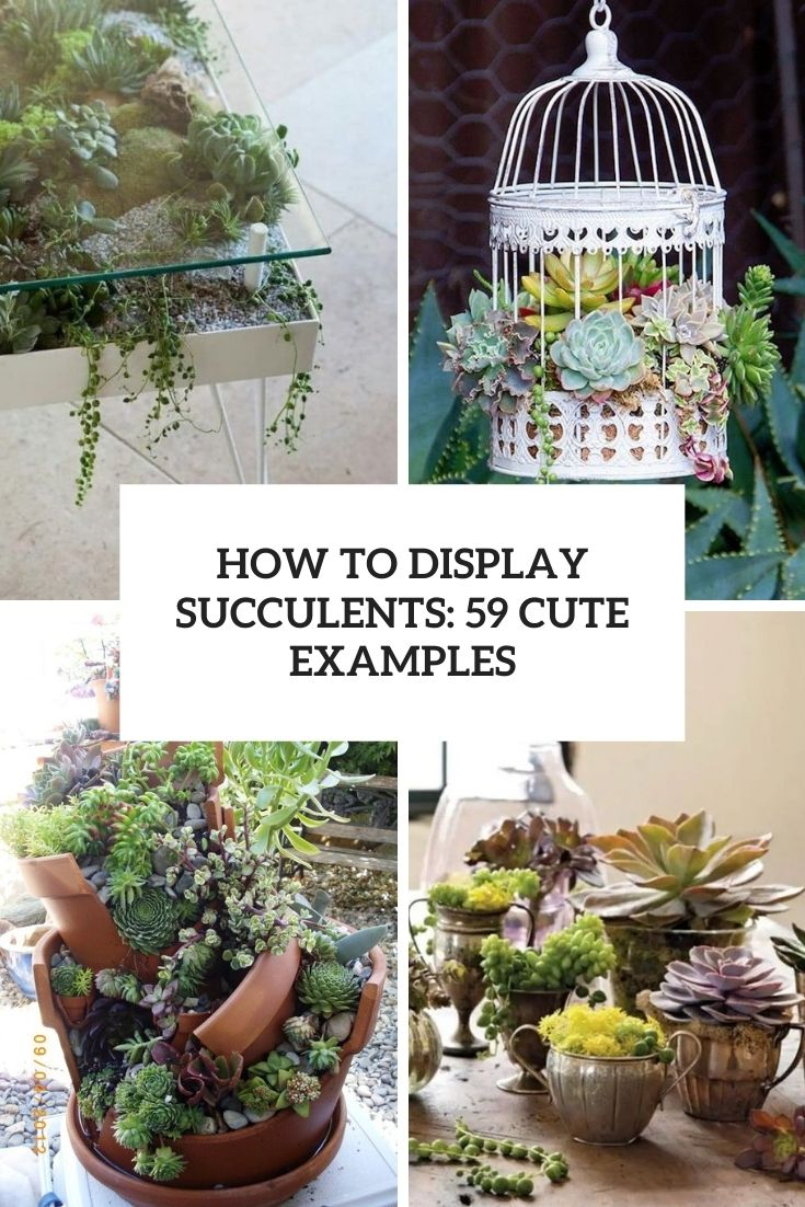 how to display succulents 59 cute examples cover