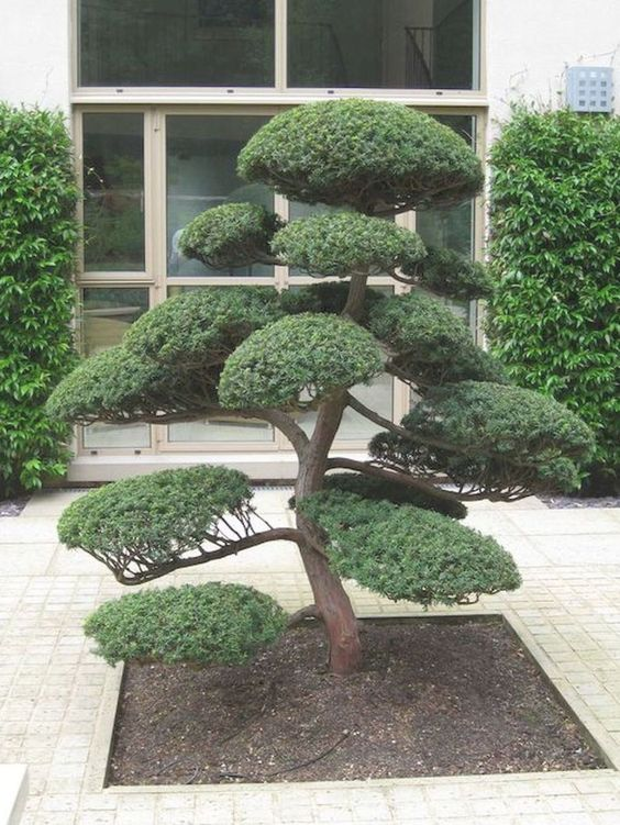 greenery walls, a statement Japanese-style tree in front of the entrance make up a chic Japanese front yard